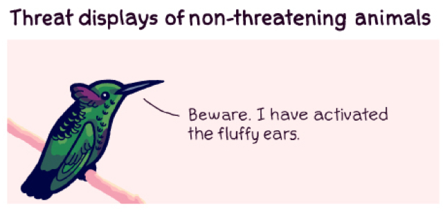 The threat displays of non-threatening animals are kind of adorable