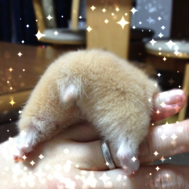 A Facebook Page Dedicated Entirely to Hamster Butts