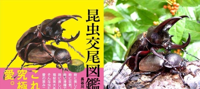 Bug Sex Book Sparks Surprising Controversy