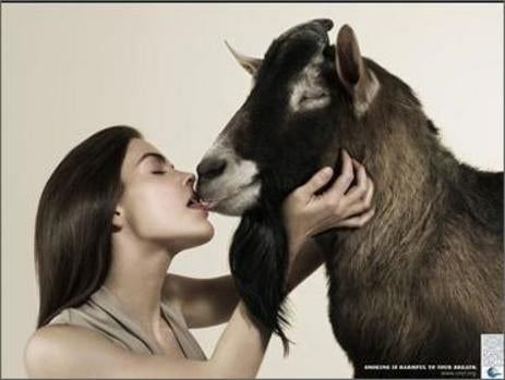 Animal Love Ads Not Confined To The Media Industry