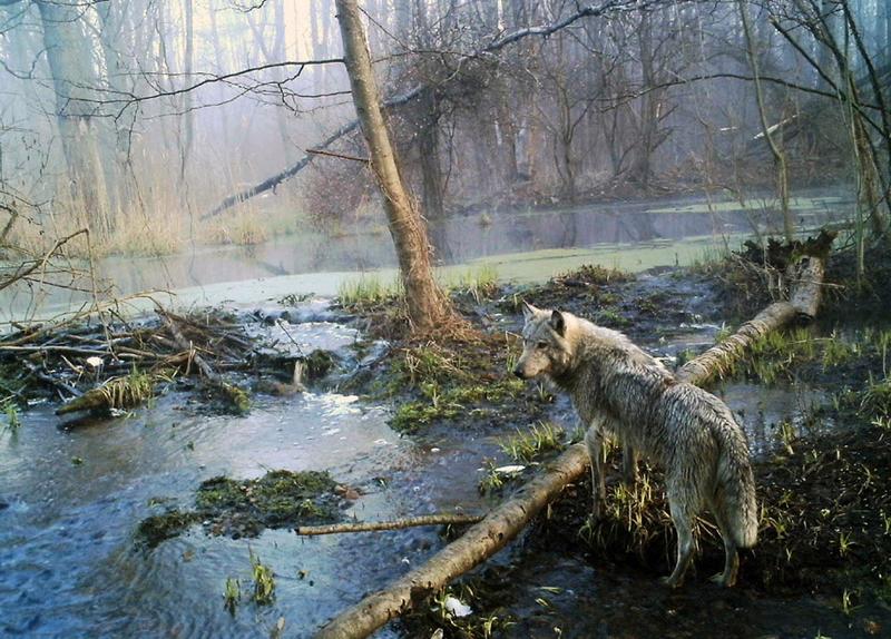 Satellite Image Interpretation of Chernobyl