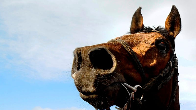Are Horses Indolent Layabouts? Researchers Think Maybe