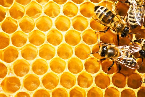 Cell Phone Radiation May Be Killing Off Bees (Update: Or Maybe Not)