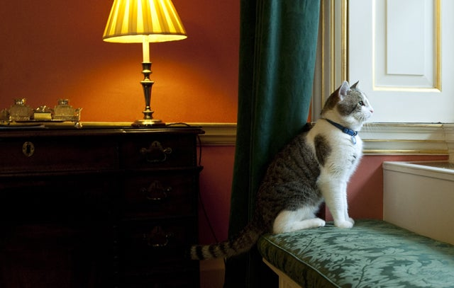 House Cats More Interesting than British Politicians