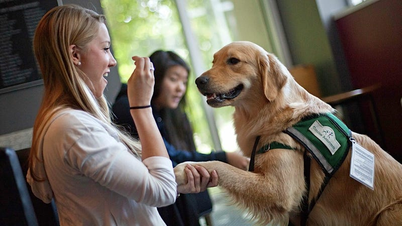Puppies Are Running an Exam-Week Racket on College Campuses