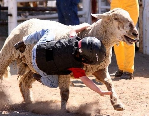 Today In Mutton Bustin'
