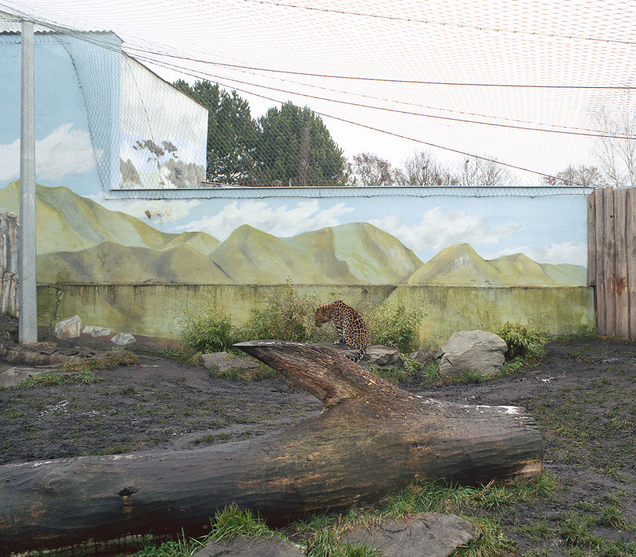 The Weird, Depressing Stage Sets That Zoos Build For Their Animals