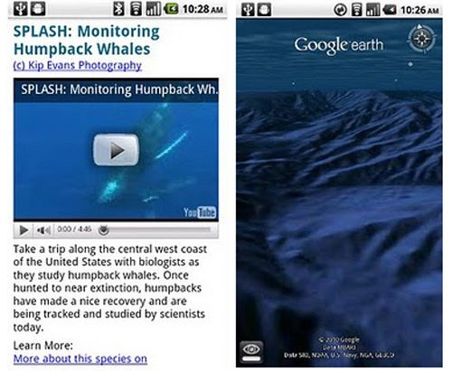 Google Now Invading the Privacy of Dolphins, Sponges and Sea Cucumbers