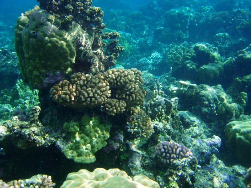 Some coral reefs could survive environmental changes for a very unexpected reason