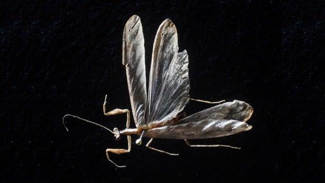 Sosem látott ájtatos manót találtak az afrikai dzsungelben
