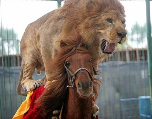 The China Olympics Should Only Involve Lions