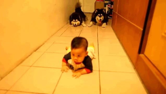 Baby Crawling or Doggy Crawling: Which Is Cuter?
