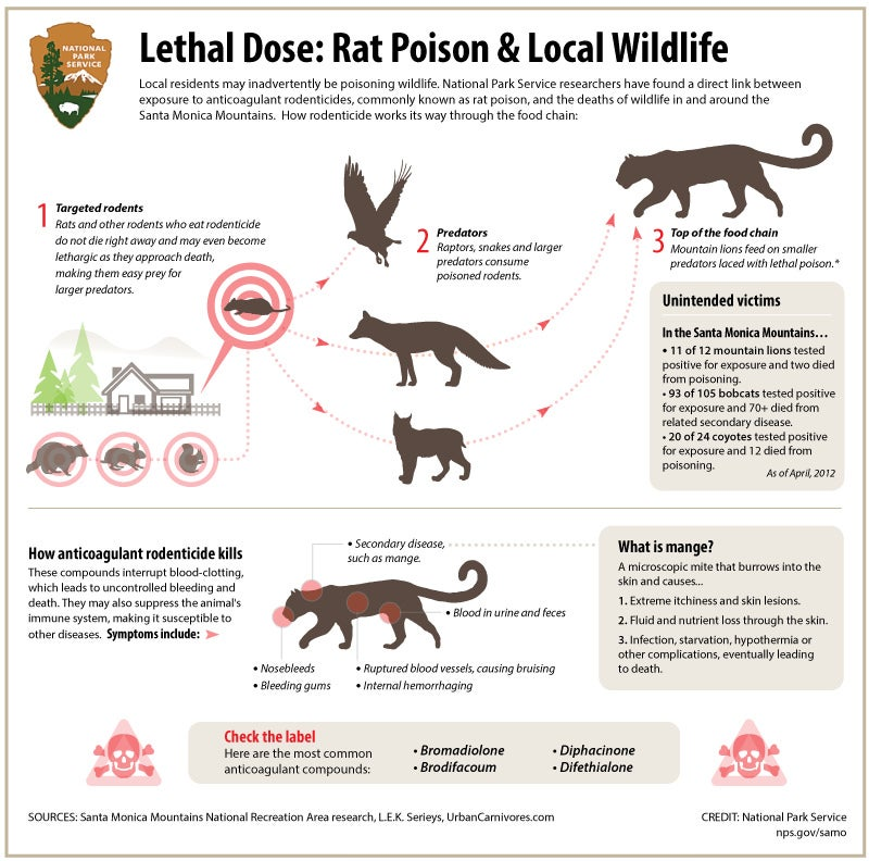 Stop Using Rat Poison, It's Killing Wildlife
