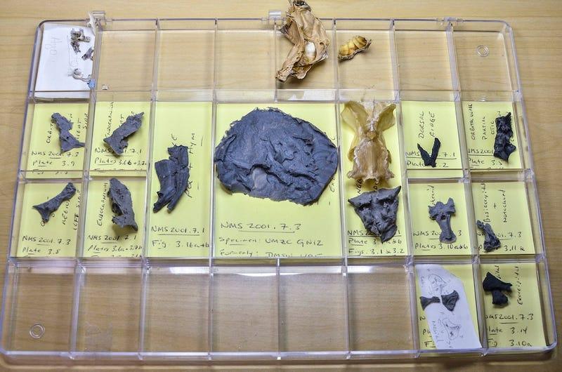 300 million years ago, your great ancestor had a head like a shark's
