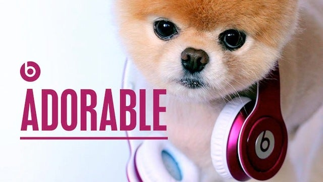 Internet's Cutest Dog Endorses World's Dumbest Headphones