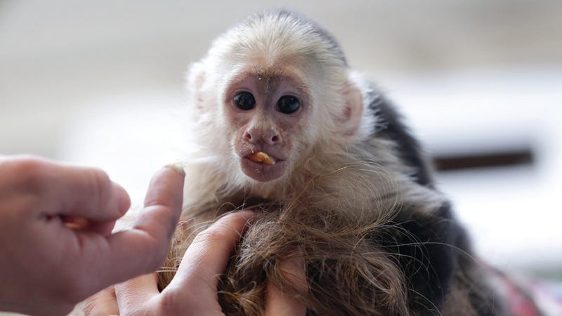 Justin Bieber's Monkey Is Now a Naturalized German Citizen