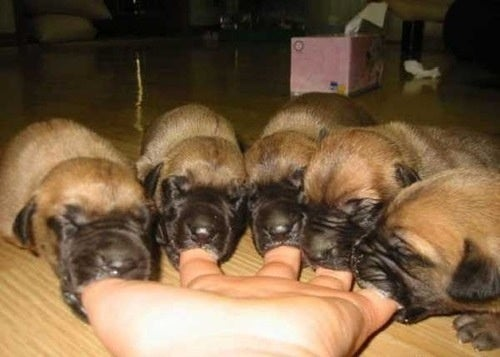 Adorable Finger Puppies Are A Tiny Delight