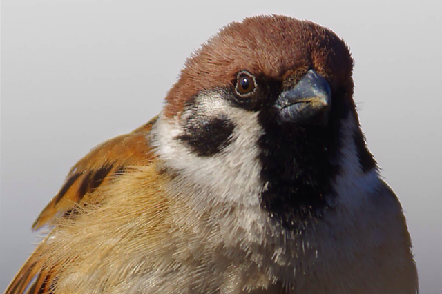 """The Successor to """"Duck Lips"""" Is """"Sparrow Face"""""""