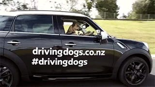 Okay, Driving Dogs is actually a thing?