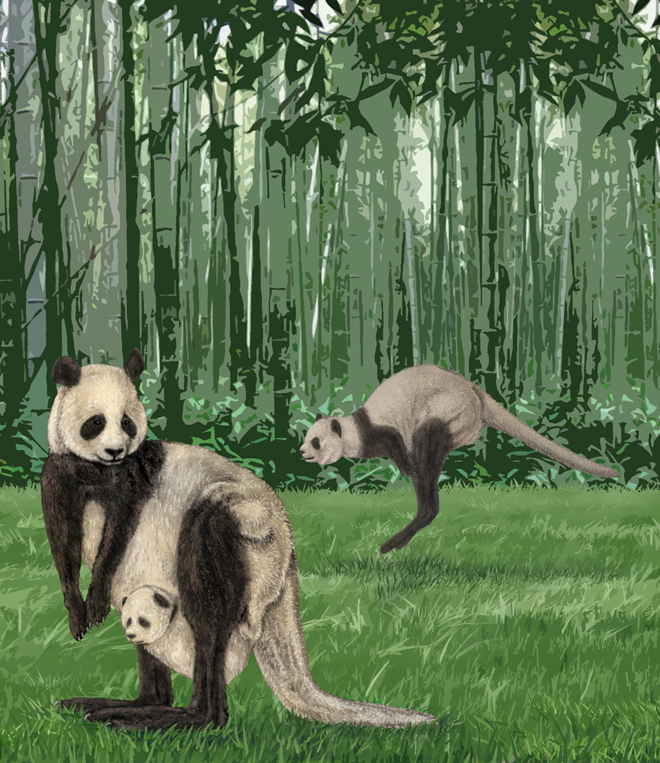 Unholy animal hybrids, as drawn by science illustrators