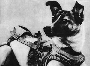 10 Intrepid Animal Astronauts