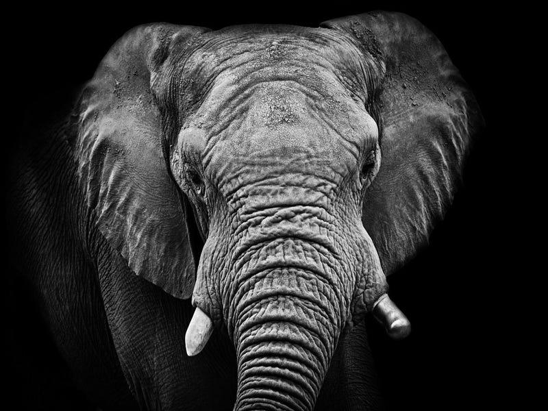 How Elephant Armies Built the Ancient World