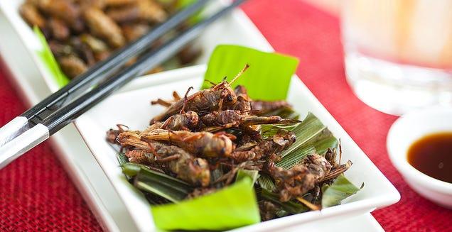 No, los insectos no son el futuro de los alimentos