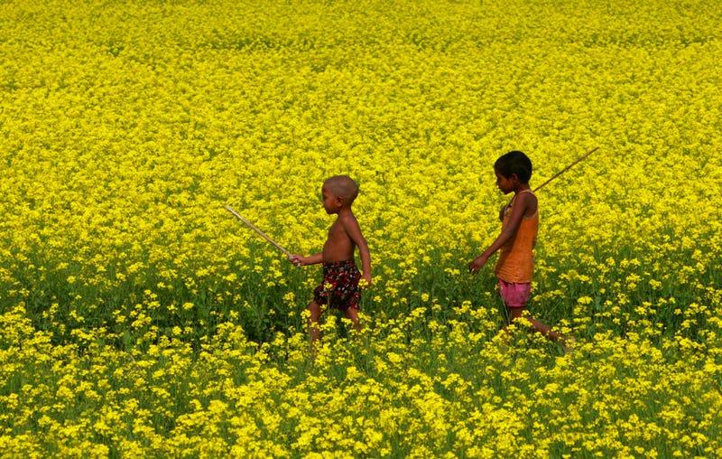 Children Of The Mustard