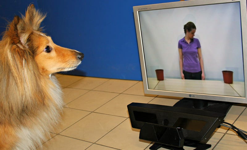 Can dogs tell when we're talking to them?