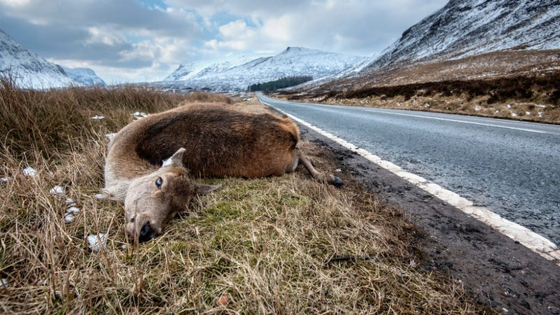 Is Roadkill the Next Big American Cuisine?