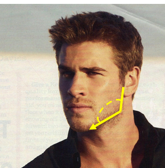 An Analysis of the Male Jawline