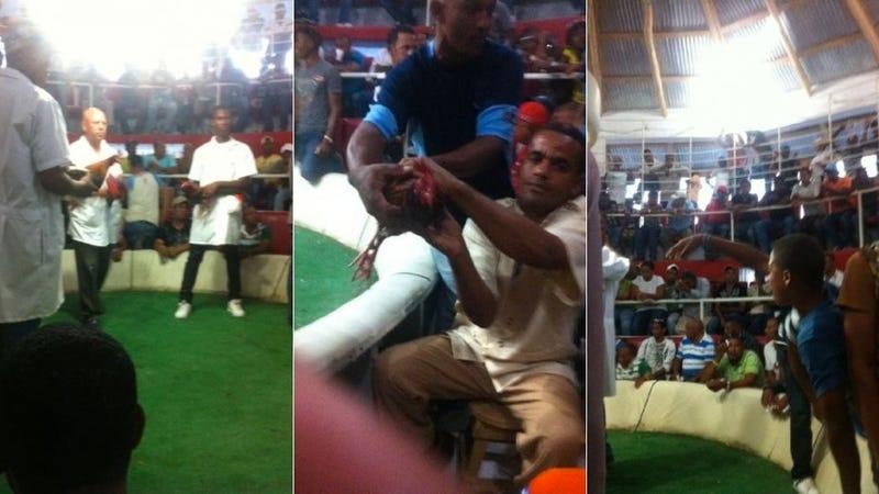 Texans CB Kareem Jackson Tweets A Dominican Cockfight