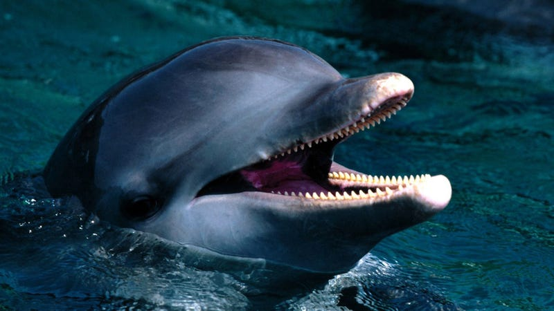 Why dolphins, cats, and other carnivores can't taste sweets