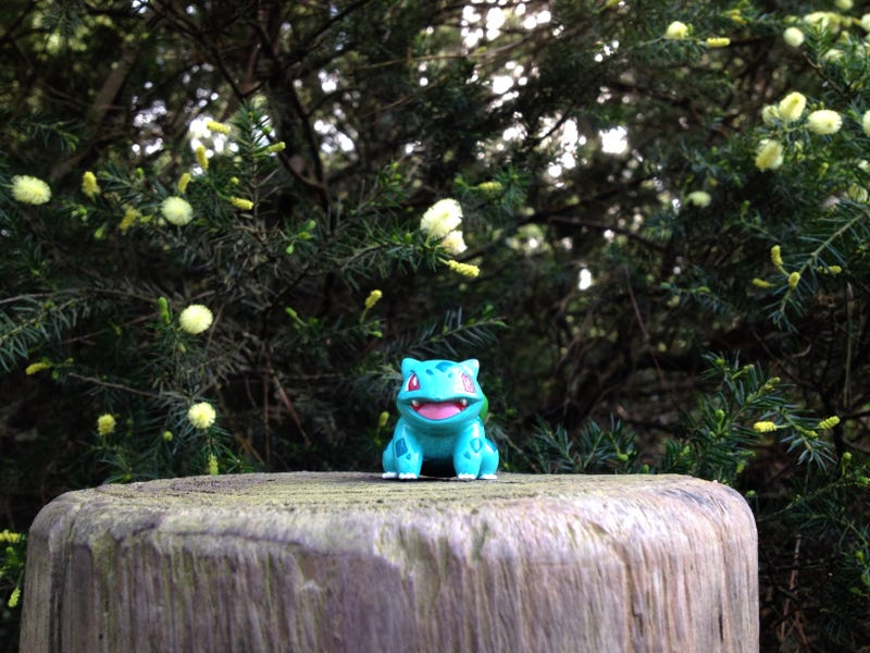 Welcome to Project Bulbasaur Botany