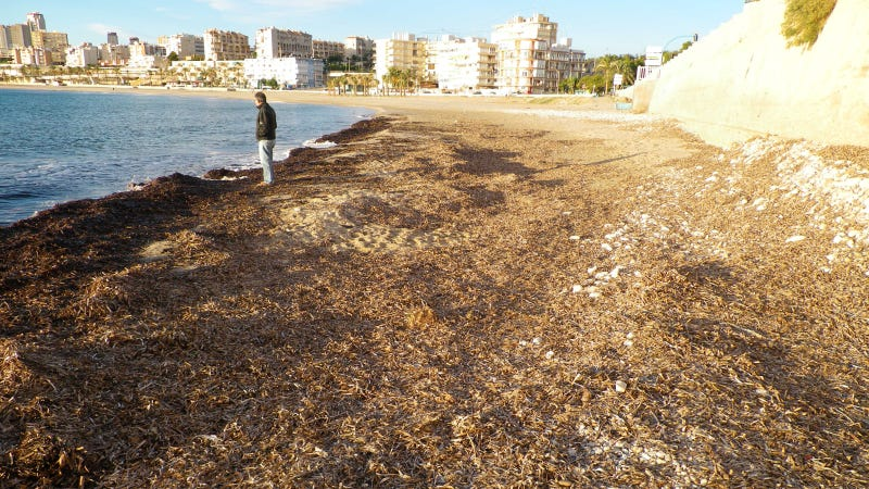 Seaweed-Sucking Truck to Clean Spain's Hottest Beaches