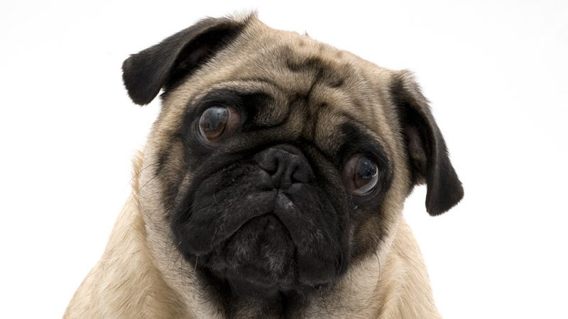 Dogs Are So Sweet That They Get Upset Even When Strangers Cry