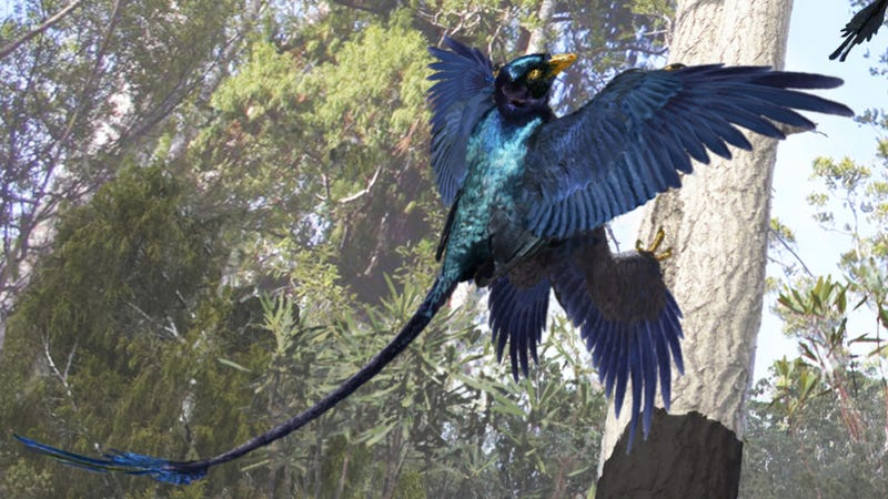 This four-winged dinosaur is helping rewrite the book on prehistoric plumage