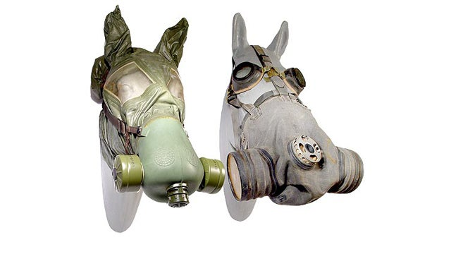 Horses Need Gas Masks Too