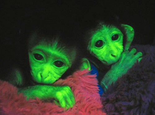 Nobel Prize in Chemistry Awarded for Transgenic, Glowing Animals