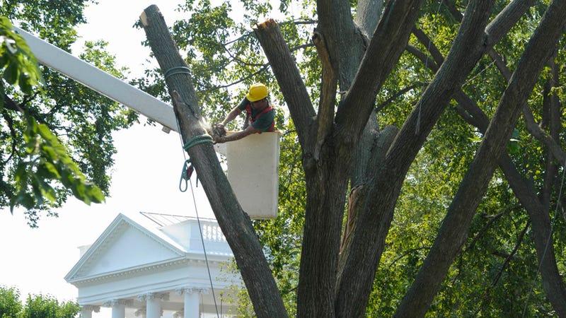 Barack Obama Tears Down Reagan-Era Tree