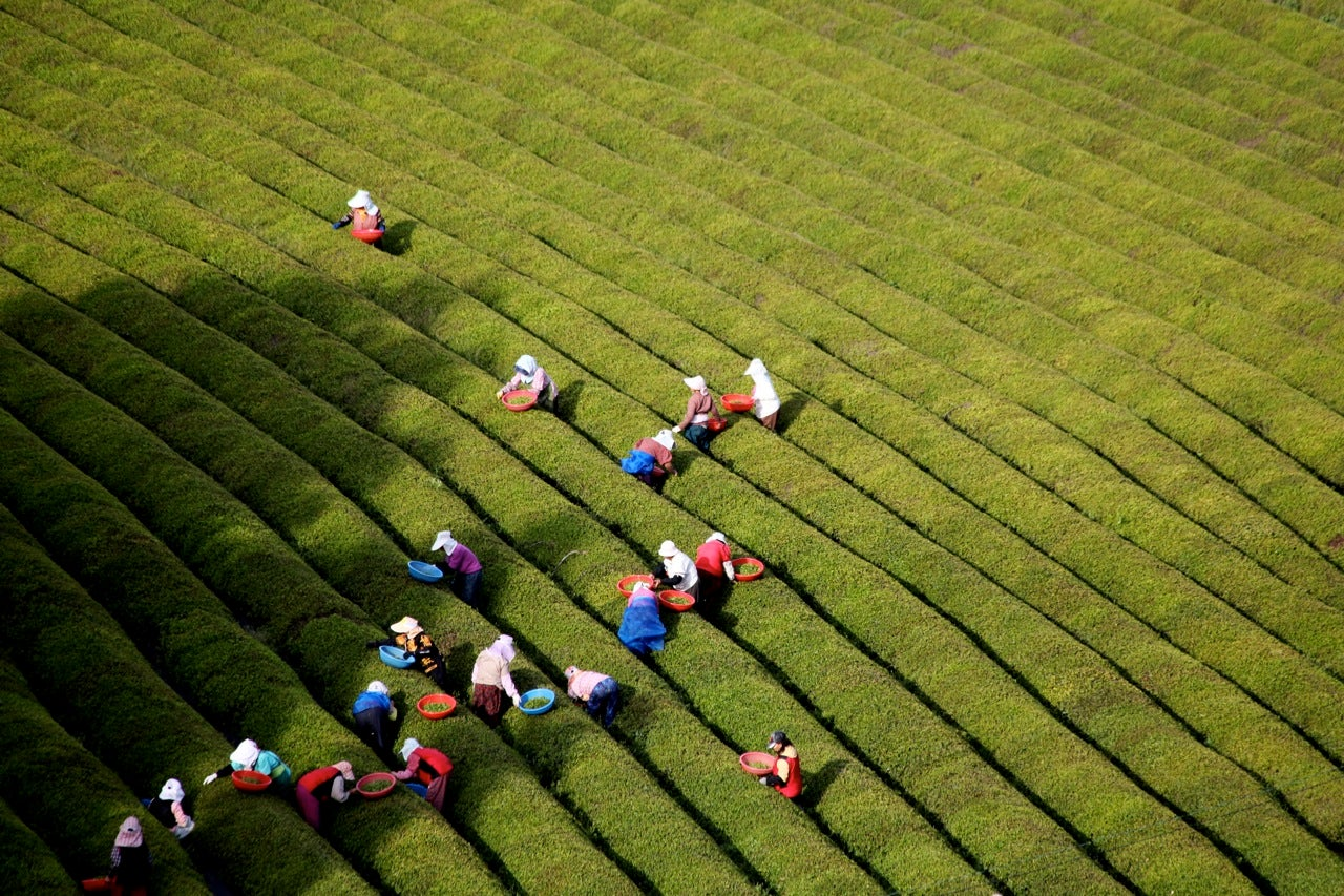 The Chinese Tea Study that the Tea Party Wants to Suppress
