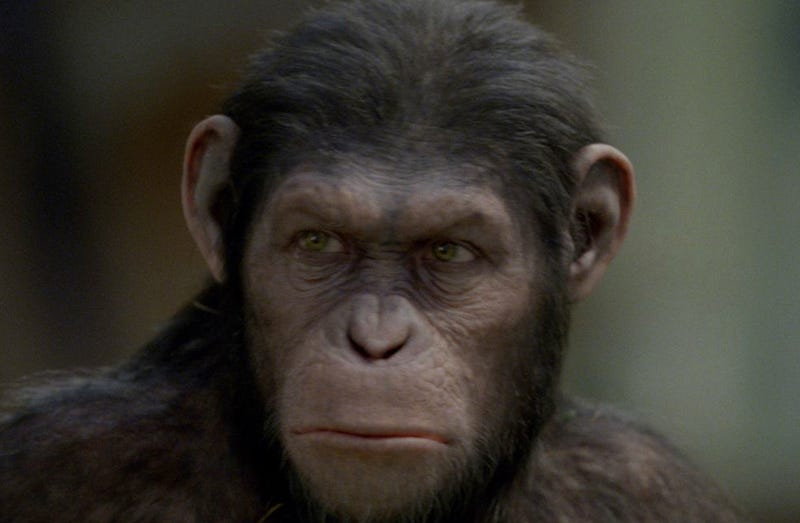 Should we create animals with human-like intelligence?