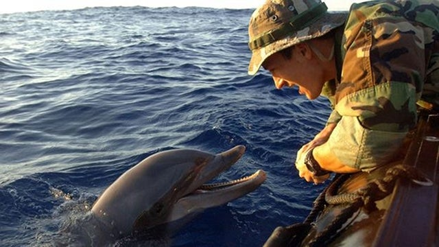 Pentagon To Replace Mine-Clearing Dolphins With Robots
