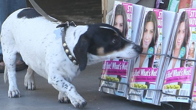 Selma Blair's Dog Interested In What's Hot & What's Not