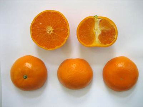 Mutation breeding creates the world's most perfect orange