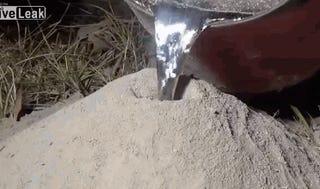 Ant hill? Check. Molten Aluminum? Ch- Wait, what?!?