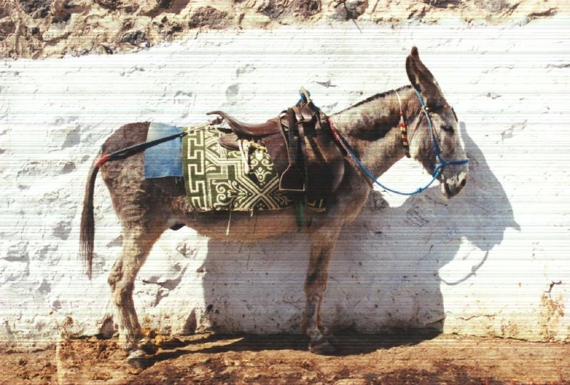 "Turkish Shepherds Use ""Plug-and-Play Donkeys"" To Get Online"