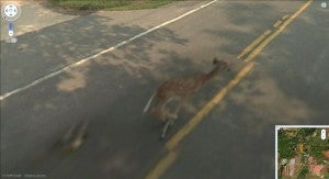 Google Maps Loves Guns, Hates Bambi