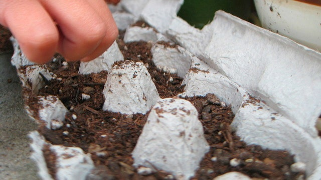 Use an Egg Carton to Jumpstart Your Garden this Spring