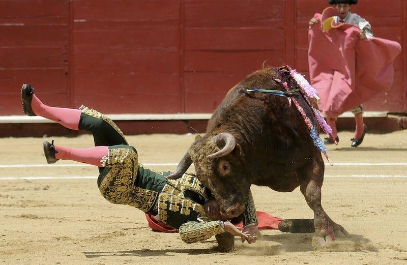 Bull Hit
